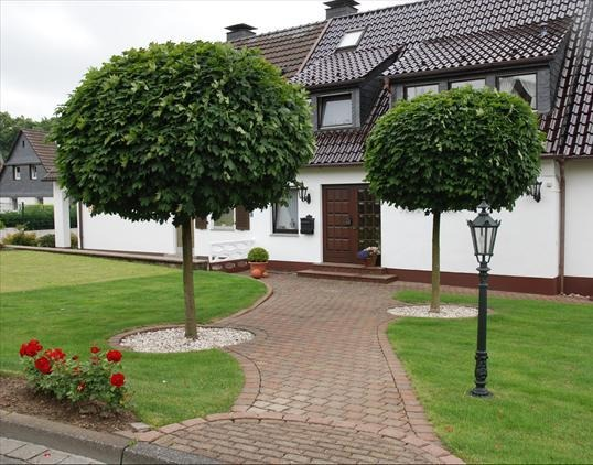 Arbusti si arbori ornamentali pret oferta for Arbusti ornamentali