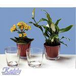 Vas Mini Flowerpot - Pret | Preturi Vas Mini Flowerpot